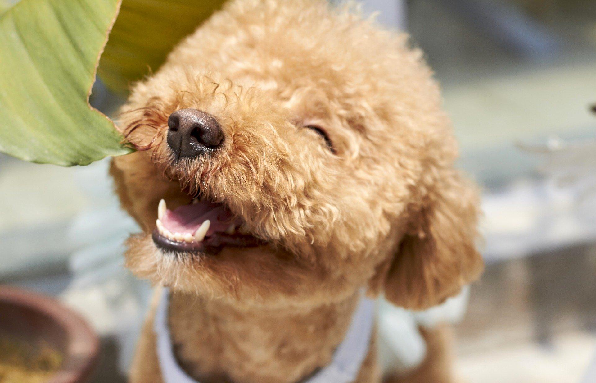 もう失敗しない!愛犬の正しい爪切りの頻度や対処法をご紹介   winnova